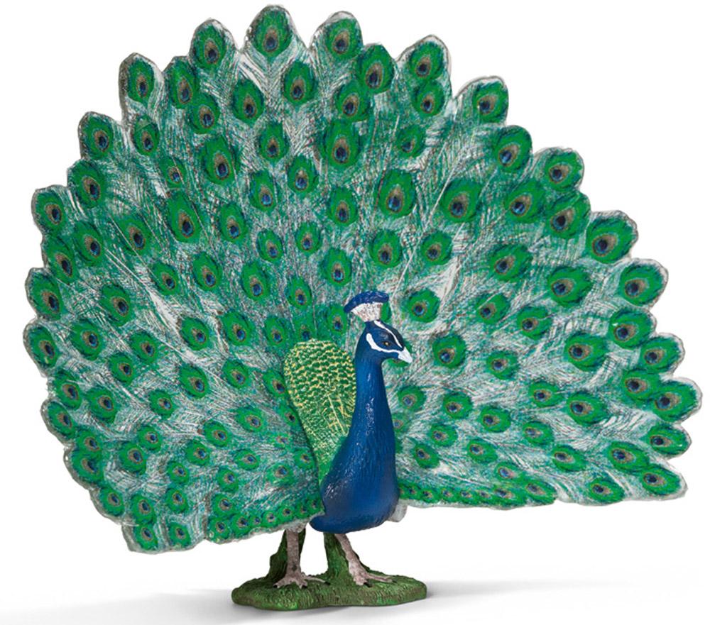 Schleich Фигурка Павлин13728Павлин из-за своего пышного, яркого хвоста считается одной из самых красивых птиц. Павлины обитают в Средней и Юго-Восточной Азии на высоте до 2000 метров. Предпочитают селиться в лесах, джунглях. Любят заросли кустарников, вырубки и берега рек. Взрослый павлин имеет размеры тела 100-125 см, хвоста 40-50 см. Весит около 5 кг. Одомашнены и выращиваются людьми. Павлин неофициально считается национальной птицей Ирана. Фигурка Schleich Павлин раскрашивалась вручную с особой внимательностью к каждой детали. Изготовление игрушек находится под контролем Берлинского зоопарка, поэтому игрушки так похожи на настоящих животных. Фигурка Schleich Павлин является отличным обучающим материалом и знакомит детей с представителями животного мира.