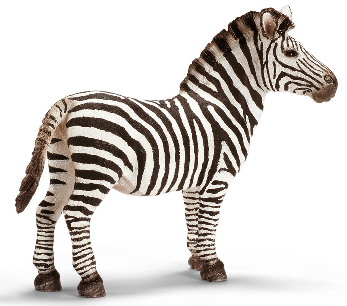 Schleich Фигурка Жеребец зебры14391Зебра - представитель одного из самых необычных животных на планете, имеющих черно-белую окраску. Белые полоски на черном фоне не только выделяют зебру среди остальных обитателей африканской саванны, но и маскируют ее от недоброжелателей. Может показаться, что она излишне необычно выглядит и привлекает своим внешним видом хищников: львов и быстрых гепардов. Но наоборот, многие животные, в том числе и насекомые, не замечают монотонную окраску зебры, поэтому и не кусают. Зебры - травоядные животные, они любят травку, и лакомиться зелеными кустарниками. Иногда ради свежей травы, и воды им приходится преодолевать огромные расстояния. Фигурка Schleich Жеребец зебры выполнена из высококачественного каучукового пластика, не вызывающего аллергии. Можно собрать всех диких животных, проживающих на территории африканских стран. Поселить у себя дома семью зебр и создать для них маленький уютный уголок в импровизированной саванне. Работа над игрушками Schleich...
