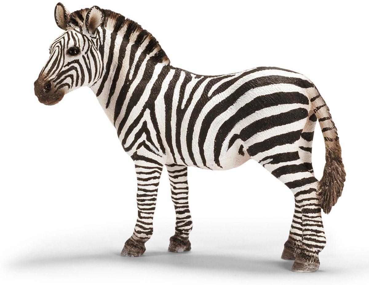 Schleich Фигурка Кобыла зебры14392Зебры - травоядные животные, они любят кушать травку и лакомиться низкими кустарниками. Иногда ради сочной травы и зеленых веточек, им приходится преодолевать огромные расстояния. Вечером после жаркого дня все животные собираются у водопоя. Белые полоски на черном фоне не только выделяют зебру среди остальных обитателей африканской саванны, но и маскируют ее от недоброжелателей. Может показаться, что она излишне необычно выглядит и привлекает своим внешним видом хищников: львов и быстрых гепардов. Но наоборот, многие животные, в том числе и насекомые, не замечают монотонную окраску зебры, поэтому и не кусают. Фигурка Schleich Кобыла зебры выполнена из высококачественного каучукового пластика, не вызывающего аллергии. Можно собрать всех диких животных, проживающих на территории африканских стран. Поселить у себя дома семью зебр и создать для них маленький уютный уголок в импровизированной саванне. Работа над игрушками Schleich ведется совместно с...