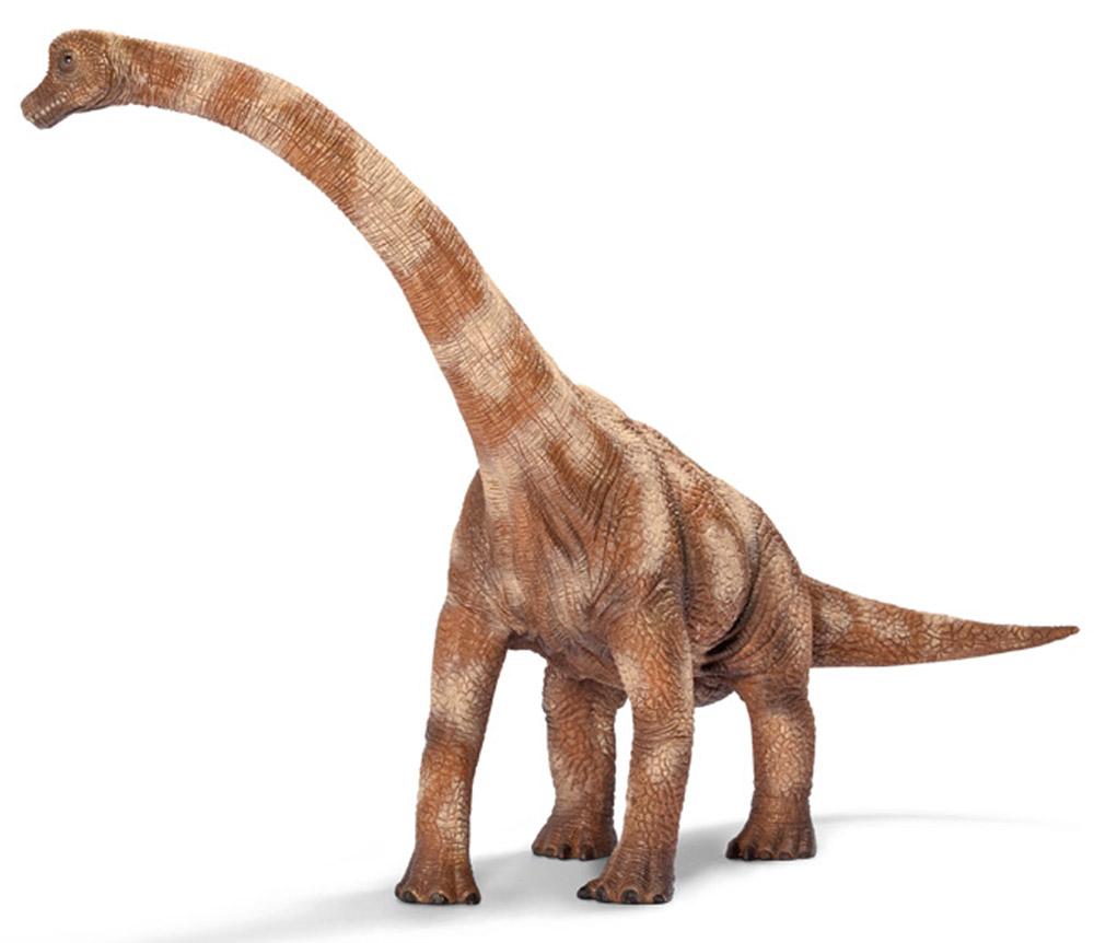 Schleich Фигурка Брахиозавр14515Брахиозавр очень похож на жирафа, но, в отличие от него, имеет длинный хвост. Небольшая голова, шея длиной 8 метров, длинный хвост, сравнительно короткие конечности - так выглядел типичный брахиозавр. Самые крупные особи брахиозавра жили на территории Америки. Фигурка Schleich Брахиозавр очень красиво и качественно выполнена. Высоко поднятая шея голова брахиозавра говорит о том, что они чаще всего питались листвой деревьев.