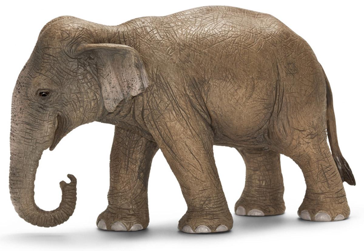 Schleich Фигурка Азиатская слониха14654Азиатский слон - животное, которое прекрасно приручаются, его часто используют в качестве рабочей силы. Азиатские слоны живут в семейных группах, которые составляют от двух до десяти слонов. Считается, что слоны способны сопереживать своим соплеменникам, хранить воспоминания о том, когда бывает засуха, или о том, где расположено хорошее пастбище. Фигурка Schleich Азиатская слониха, раскрашенная вручную, выполнена из безопасного материала - пластика. Компания Schleich специализируется на выпуске детских игрушек, знакомящих с окружающей средой, развивающих творческое мышление, мелкую моторику рук.