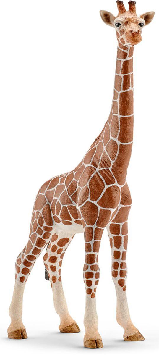 Schleich Фигурка Жираф самка14750Жираф - самое высокое в мире животное. Питается листьями деревьев и именно поэтому имеет такую длинную шею. Тело окрашено в пятнистый рисунок. На голове имеются симпатичные рожки. В настоящее время жирафа можно встретить на востоке Африки. Жираф исключительно травоядное животное и питается листвой с деревьев, где у него нет конкурентов. Тело покрыто шерстью желтого цвета с коричневыми пятнами на ней, что позволяет маскироваться от хищников. Жираф с длинной шеей и характерной окраской - яркий представитель африканской саваны. Его мощная шея способна выдерживать большие нагрузки и позволяет дотянуться до самых высоких веточек с вкусными листочками. Фигурка раскрашивалась вручную с особой внимательностью к каждой детали. Изготовление игрушек находится под контролем Берлинского зоопарка, поэтому игрушки так похожи на настоящих животных. Фигурка Schleich Жираф является отличным обучающим материалом и знакомит детей с представителями животного мира.