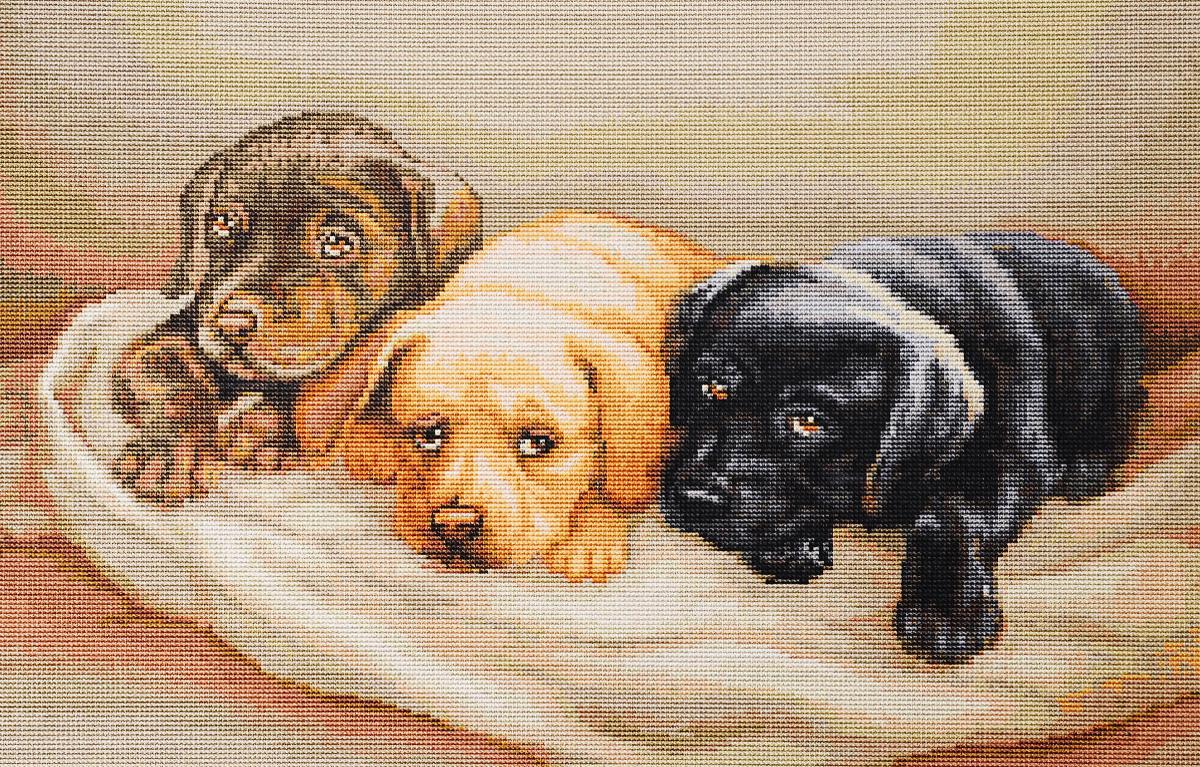 Набор для вышивания крестом Luca-S Три собачки, 25 х 18 смG434Набор для вышивания крестом Luca-S Три собачки поможет создать красивую вышитую картину. Рисунок-вышивка, выполненный на канве, выглядит стильно и модно. Вышивание отвлечет вас от повседневных забот и превратится в увлекательное занятие! Работа, сделанная своими руками, не только украсит интерьер дома, придав ему уют и оригинальность, но и будет отличным подарком для друзей и близких! Набор содержит все необходимые материалы для вышивки на канве в технике счетный крест. Канва разграничена на клетки по 10 пунктов, как и на схеме, что существенно облегчает работу вышивальщицы. В набор входит: - канва гобеленовая Zweigart 100 клеток в 10 см (бежевого цвета), - нитки мулине Anchor - 100% мерсеризованный хлопок (38 цветов), - черно-белая символьная схема, - инструкция на русском языке, - игла.