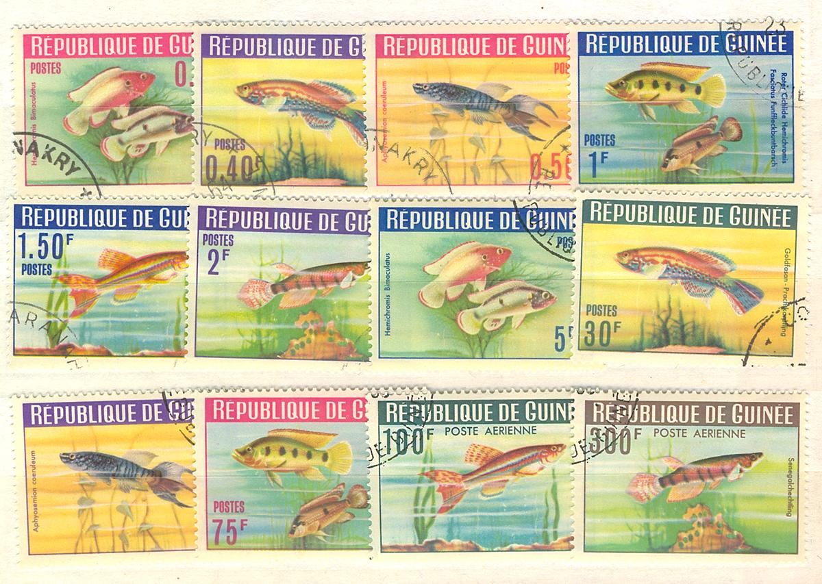 Комплект из 12 марок Рыбы. Республика Гвинея, 1988 годМКСПБ 34.2016-27Комплект из 12 марок Рыбы. Республика Гвинея, 1988 год. Размер марок: 3 х 4 см. Сохранность хорошая.
