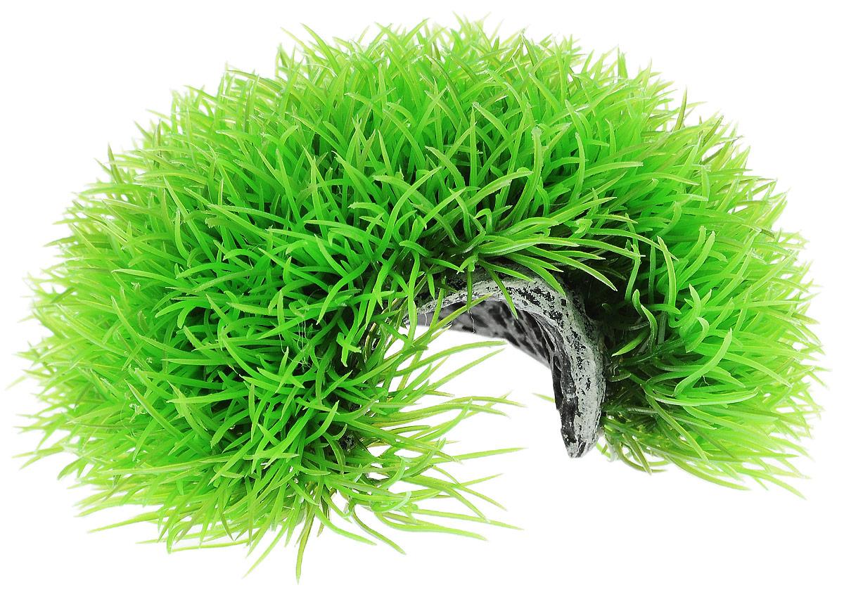 Растение для аквариума Barbus Лохматая норка, пластиковое, диаметр 15 смPlant 063Растение Barbus Лохматая норка выполнено из высококачественного нетоксичного пластика. Оно станет идеальным укрытием для мальков и прекрасным украшением вашего аквариума. Изделие не требует дополнительного ухода. Растение абсолютно безопасно, ене загрязняет воду, нейтрально к водному балансу, устойчиво к истиранию краски, подходит как для пресноводного, так и для морского аквариума. Растение для аквариума Barbus Лохматая норка поможет вам смоделировать потрясающий пейзаж на дне вашего аквариума или террариума. Диаметр растения: 15 см. Высота растения: 6,5 см.