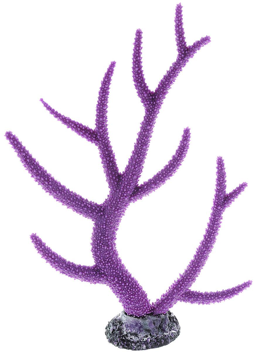 Декорация для аквариума Barbus Коралл, цвет: фиолетовый, 26 х 6,4 х 33,5 смDecor 261Декорация для аквариума Barbus Коралл, выполненная из высококачественного нетоксичного полирезина, станет прекрасным украшением вашего аквариума. Изделие отличается реалистичным исполнением с множеством мелких деталей. Декорация абсолютно безопасна, нейтральна к водному балансу, устойчива к истиранию краски, подходит как для пресноводного, так и для морского аквариума. Благодаря декорациям Barbus вы сможете смоделировать потрясающий пейзаж на дне вашего аквариума или террариума.