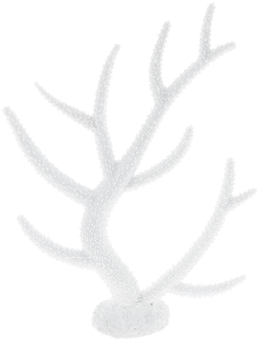Декорация для аквариума Barbus Коралл, цвет: белый, 26 х 6,4 х 33,5 смDecor 258Декорация для аквариума Barbus Коралл, выполненная из высококачественного нетоксичного полирезина, станет прекрасным украшением вашего аквариума. Изделие отличается реалистичным исполнением с множеством мелких деталей. Декорация абсолютно безопасна, нейтральна к водному балансу, устойчива к истиранию краски, подходит как для пресноводного, так и для морского аквариума. Благодаря декорациям Barbus вы сможете смоделировать потрясающий пейзаж на дне вашего аквариума или террариума.