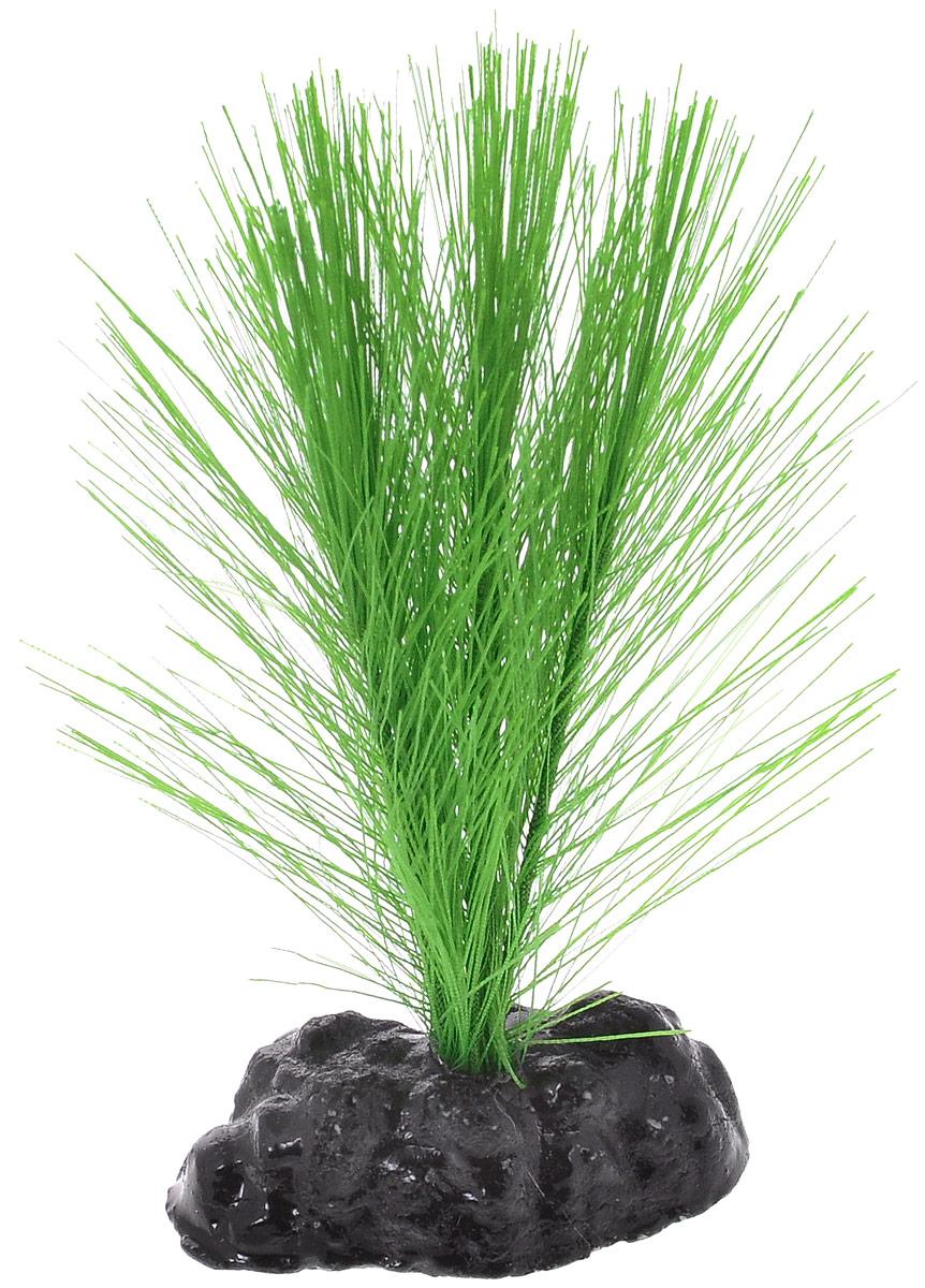 Растение для аквариума Barbus Амбулия, шелковое, высота 10 смPlant 034/10Растение для аквариума Barbus Амбулия, выполненное из качественного шелка, станет оригинальным украшением вашего аквариума. В воде создается абсолютная имитация живого растения. Можно использовать в любой воде: пресной или морской. Изделие полностью безопасно для обитателей аквариума, не токсично, нейтрально к водному балансу, устойчиво к истиранию краски. Растение Barbus поможет вам смоделировать потрясающий пейзаж на дне вашего аквариума или террариума. Высота растения: 10 см.