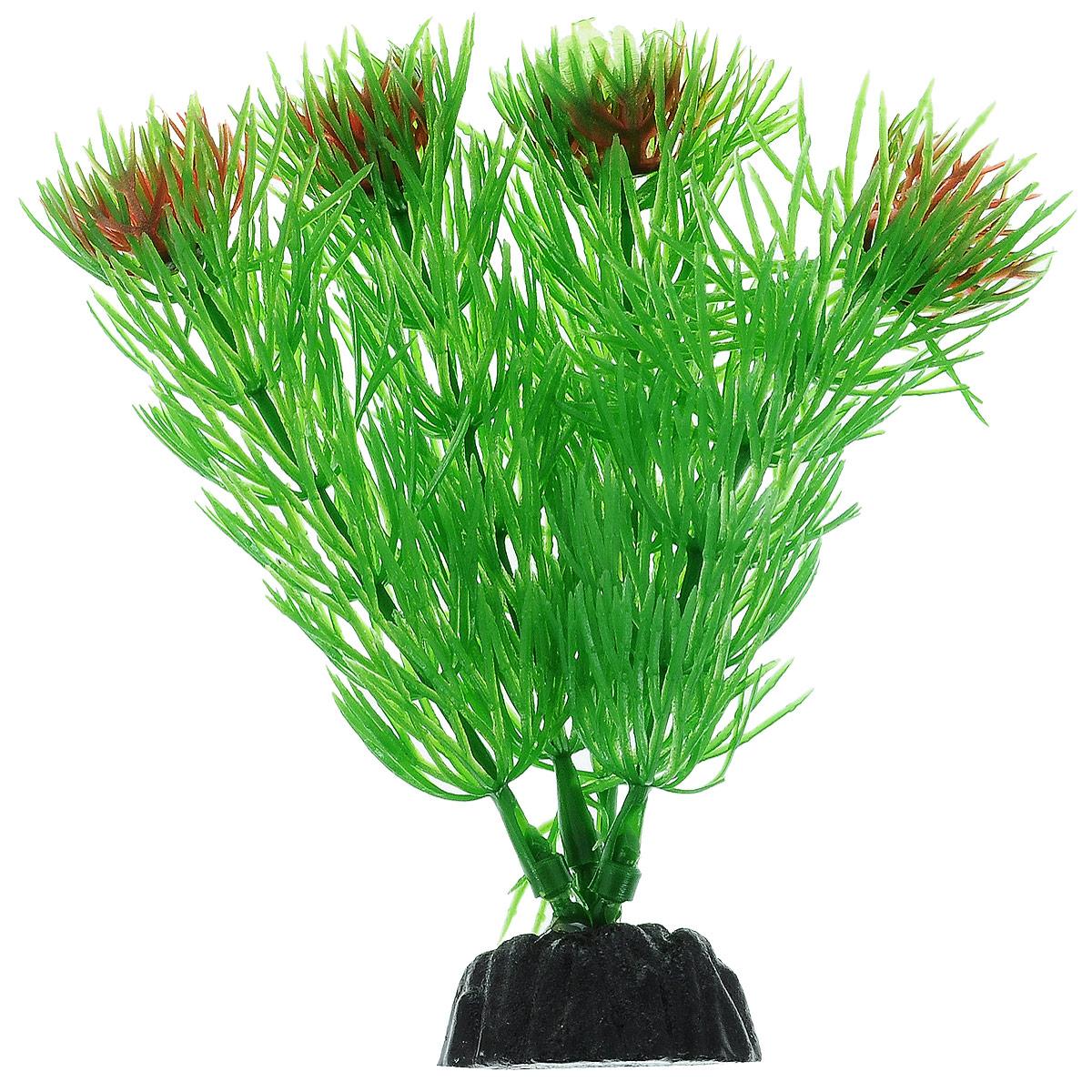 Растение для аквариума Barbus Амбулия, пластиковое, высота 10 смPlant 002/10Растение для аквариума Barbus Амбулия, выполненное из качественного пластика, станет прекрасным украшением вашего аквариума. Пластиковое растение идеально подходит для дизайна всех видов аквариумов. Оно абсолютно безопасно, нейтрально к водному балансу, устойчиво к истиранию краски, подходит как для пресноводного, так и для морского аквариума. Растение для аквариума Barbus поможет вам смоделировать потрясающий пейзаж на дне вашего аквариума или террариума. Высота растения: 10 см.