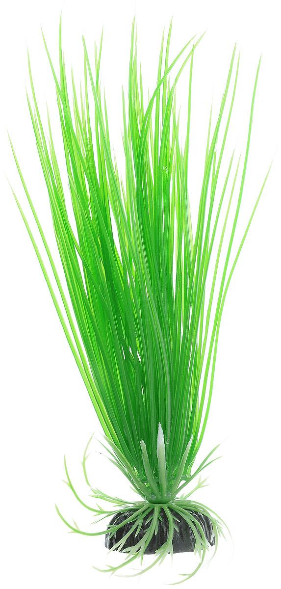 Растение для аквариума Barbus Акорус, пластиковое, высота 20 смPlant 007/20Растение для аквариума Barbus Акорус, выполненное из качественного пластика, станет оригинальным украшением вашего аквариума. Пластиковое растение идеально подходит для дизайна всех видов аквариумов. Оно абсолютно безопасно, не токсично, нейтрально к водному балансу, устойчиво к истиранию краски, подходит как для пресноводного, так и для морского аквариума. Растение для аквариума Barbus поможет вам смоделировать потрясающий пейзаж на дне вашего аквариума или террариума. Высота растения: 20 см.