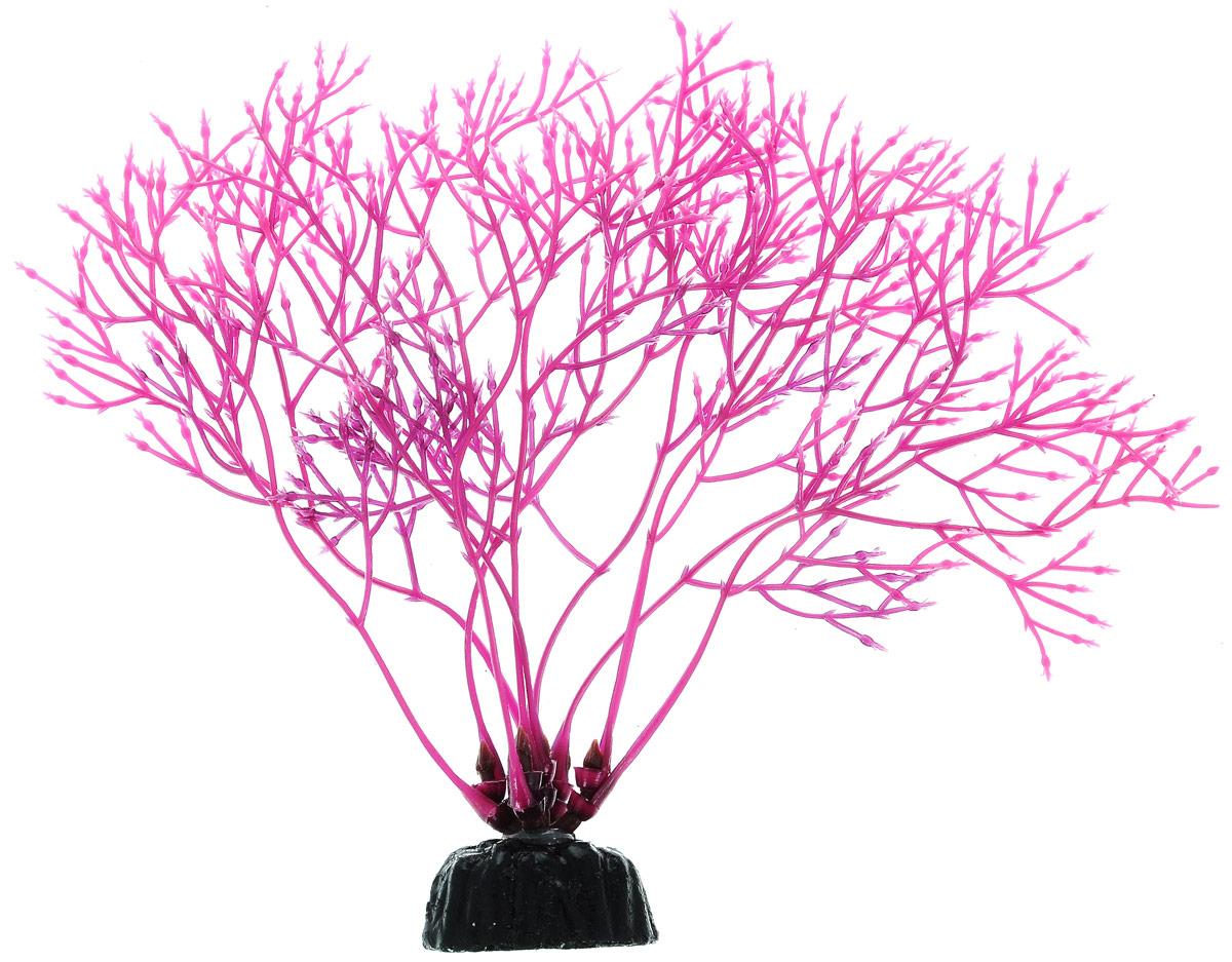 Растение для аквариума Barbus Горгонария, пластиковое, цвет: сиреневый, высота 10 смPlant 031/10Растение для аквариума Barbus Горгонария, выполненное из качественного пластика, станет оригинальным украшением вашего аквариума. Пластиковое растение идеально подходит для дизайна всех видов аквариумов. Оно абсолютно безопасно, нейтрально к водному балансу, устойчиво к истиранию краски, подходит как для пресноводного, так и для морского аквариума. Растение для аквариума Barbus поможет вам смоделировать потрясающий пейзаж на дне вашего аквариума или террариума. Высота растения: 10 см.