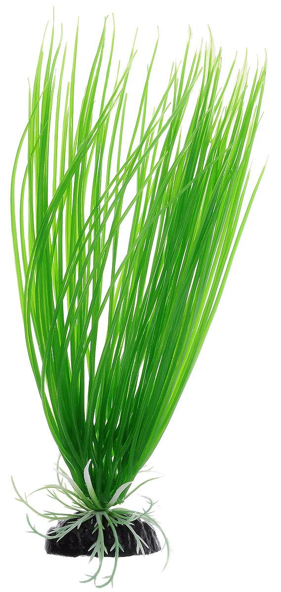 Растение для аквариума Barbus Акорус, пластиковое, высота 30 смPlant 007/30Растение для аквариума Barbus Акорус, выполненное из качественного пластика, станет оригинальным украшением вашего аквариума. Пластиковое растение идеально подходит для дизайна всех видов аквариумов. Оно абсолютно безопасно, не токсично, нейтрально к водному балансу, устойчиво к истиранию краски, подходит как для пресноводного, так и для морского аквариума. Растение для аквариума Barbus поможет вам смоделировать потрясающий пейзаж на дне вашего аквариума или террариума. Высота растения: 30 см.