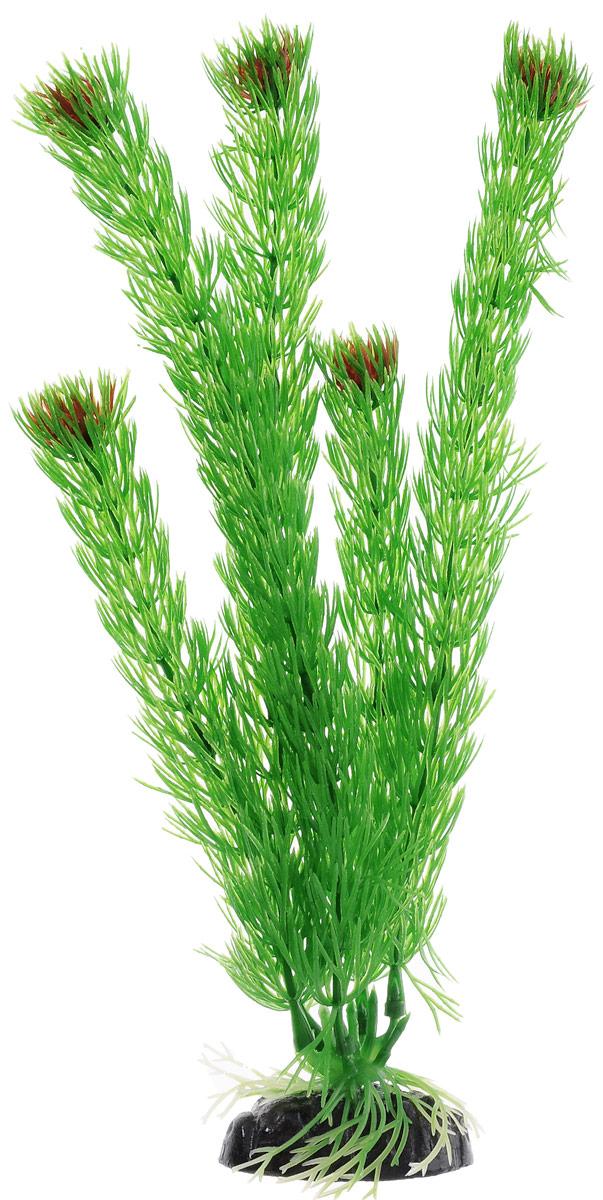 Растение для аквариума Barbus Амбулия, пластиковое, высота 30 смPlant 002/30Растение для аквариума Barbus Амбулия, выполненное из качественного пластика, станет прекрасным украшением вашего аквариума. Пластиковое растение идеально подходит для дизайна всех видов аквариумов. Оно абсолютно безопасно, нейтрально к водному балансу, устойчиво к истиранию краски, подходит как для пресноводного, так и для морского аквариума. Растение для аквариума Barbus поможет вам смоделировать потрясающий пейзаж на дне вашего аквариума или террариума. Высота растения: 30 см.