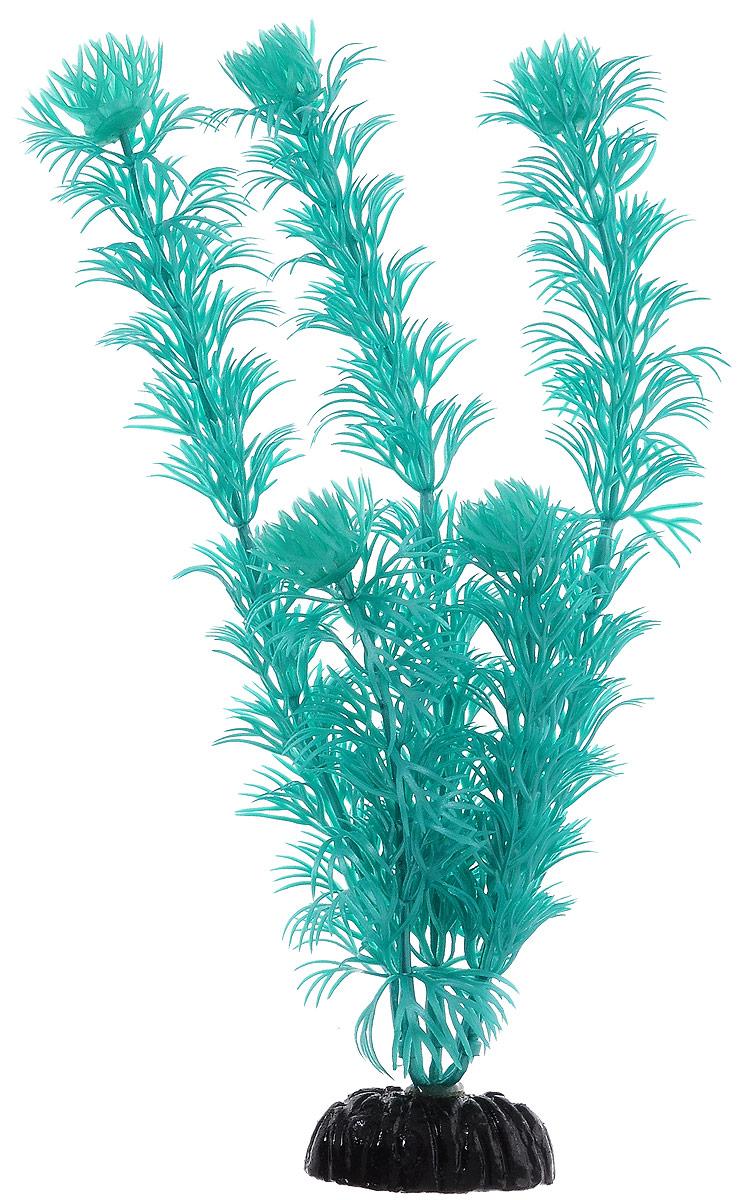 Растение для аквариума Barbus Кабомба, пластиковое, цвет: бирюзовый, высота 20 смPlant 019/20Растение Barbus Кабомба, выполненное из высококачественного нетоксичного пластика, станет прекрасным украшением вашего аквариума. Пластиковое растение идеально подходит для дизайна всех видов аквариумов. В воде происходит абсолютная имитация живых растений. Изделие не требует дополнительного ухода. Оно абсолютно безопасно, нейтрально к водному балансу, устойчиво к истиранию краски, подходит как для пресноводного, так и для морского аквариума. Растение для аквариума Barbus Кабомба поможет вам смоделировать потрясающий пейзаж на дне вашего аквариума. Высота растения: 20 см.