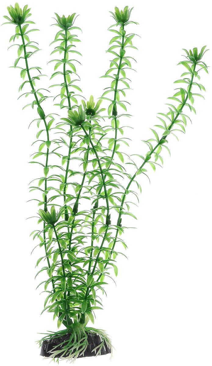 Растение для аквариума Barbus Элодея, пластиковое, высота 30 смPlant 004/30ПРастение для аквариума Barbus Элодея, выполненное из качественного пластика, станет прекрасным украшением вашего аквариума. Пластиковое растение идеально подходит для дизайна всех видов аквариумов. Оно абсолютно безопасно, нейтрально к водному балансу, устойчиво к истиранию краски, подходит как для пресноводного, так и для морского аквариума. Растение для аквариума Barbus поможет вам смоделировать потрясающий пейзаж на дне вашего аквариума или террариума. Высота растения: 30 см.