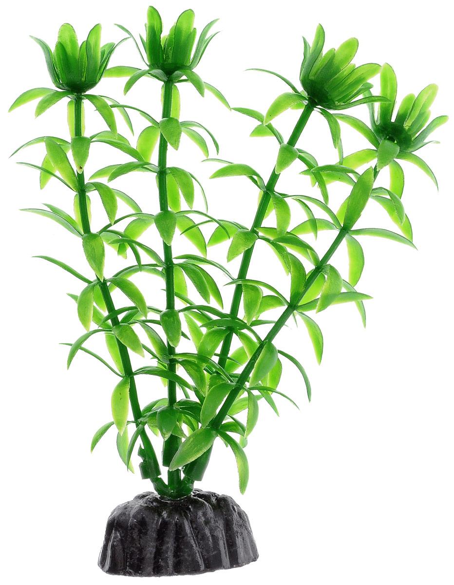 Растение для аквариума Barbus Элодея, пластиковое, высота 10 смPlant 004/10Растение для аквариума Barbus Элодея, выполненное из качественного пластика, станет прекрасным украшением вашего аквариума. Пластиковое растение идеально подходит для дизайна всех видов аквариумов. Оно абсолютно безопасно, нейтрально к водному балансу, устойчиво к истиранию краски, подходит как для пресноводного, так и для морского аквариума. Растение для аквариума Barbus поможет вам смоделировать потрясающий пейзаж на дне вашего аквариума или террариума. Высота растения: 10 см.