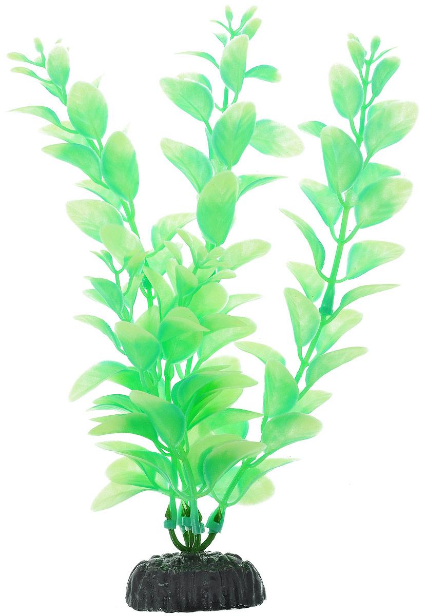 Растение для аквариума Barbus Людвигия, пластиковое, светящееся, высота 20 смPlant 057 DARK/20Растение Barbus Людвигия выполнено из высококачественного нетоксичного пластика. Оно светится в темноте и станет оригинальным и необычным украшением вашего аквариума. Изделие не требует дополнительного ухода Оно абсолютно безопасно, нейтрально к водному балансу, устойчиво к истиранию краски, подходит как для пресноводного, так и для морского аквариума. Растение для аквариума Barbus Людвигия поможет вам смоделировать потрясающий пейзаж на дне вашего аквариума или террариума. Высота растения: 20 см.