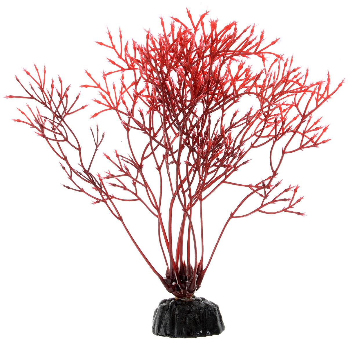 Растение для аквариума Barbus Горгонария, пластиковое, цвет: красный, высота 10 смPlant 032/10Растение для аквариума Barbus Горгонария, выполненное из качественного пластика, станет оригинальным украшением вашего аквариума. Пластиковое растение идеально подходит для дизайна всех видов аквариумов. Оно абсолютно безопасно, не токсично, нейтрально к водному балансу, устойчиво к истиранию краски, подходит как для пресноводного, так и для морского аквариума. Растение для аквариума Barbus поможет вам смоделировать потрясающий пейзаж на дне вашего аквариума или террариума. Высота растения: 10 см.