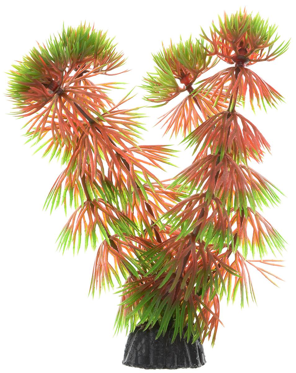 Растение для аквариума Barbus Кабомба красная, пластиковое, высота 10 смPlant 033/10Растение для аквариума Barbus Кабомба красная, выполненное из качественного пластика, станет оригинальным украшением вашего аквариума. Пластиковое растение идеально подходит для дизайна всех видов аквариумов. Оно абсолютно безопасно, не токсично, нейтрально к водному балансу, устойчиво к истиранию краски, подходит как для пресноводного, так и для морского аквариума. Растение для аквариума Barbus поможет вам смоделировать потрясающий пейзаж на дне вашего аквариума или террариума. Высота растения: 10 см.