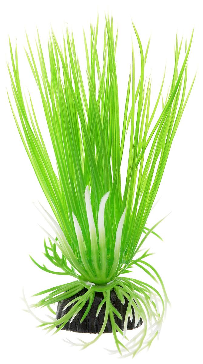 Растение для аквариума Barbus Акорус, пластиковое, высота 10 смPlant 007/10Растение для аквариума Barbus Акорус, выполненное из качественного пластика, станет оригинальным украшением вашего аквариума. Пластиковое растение идеально подходит для дизайна всех видов аквариумов. Оно абсолютно безопасно, не токсично, нейтрально к водному балансу, устойчиво к истиранию краски, подходит как для пресноводного, так и для морского аквариума. Растение для аквариума Barbus поможет вам смоделировать потрясающий пейзаж на дне вашего аквариума или террариума. Высота растения: 10 см.