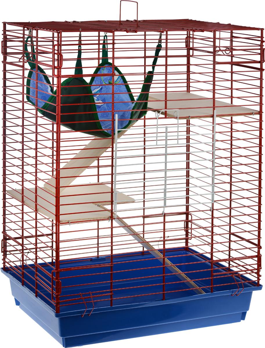 Клетка для шиншилл и хорьков ЗооМарк, цвет: синий поддон, красная решетка, 59 х 41 х 79 см. 725дк725дк_синий, красныйКлетка ЗооМарк, выполненная из полипропилена и металла, подходит для шиншилл и хорьков. Большая клетка оборудована длинными лестницами и гамаком. Изделие имеет яркий поддон, удобно в использовании и легко чистится. Сверху имеется ручка для переноски. Такая клетка станет уединенным личным пространством и уютным домиком для грызуна.