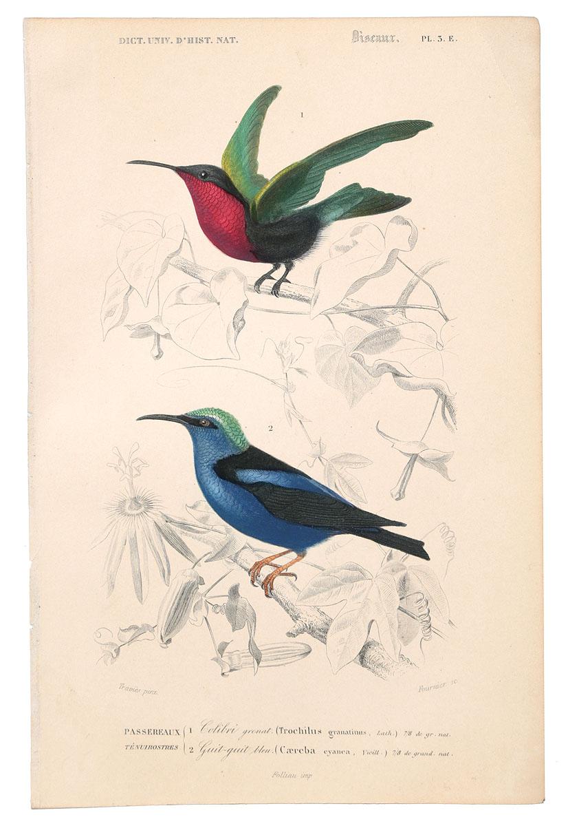 Птицы. Гравюра с ручной раскраской. Западная Европа, 1840 годНВА-2 2508 16-06Птицы. Гравюра с ручной раскраской. Западная Европа, 1840 год