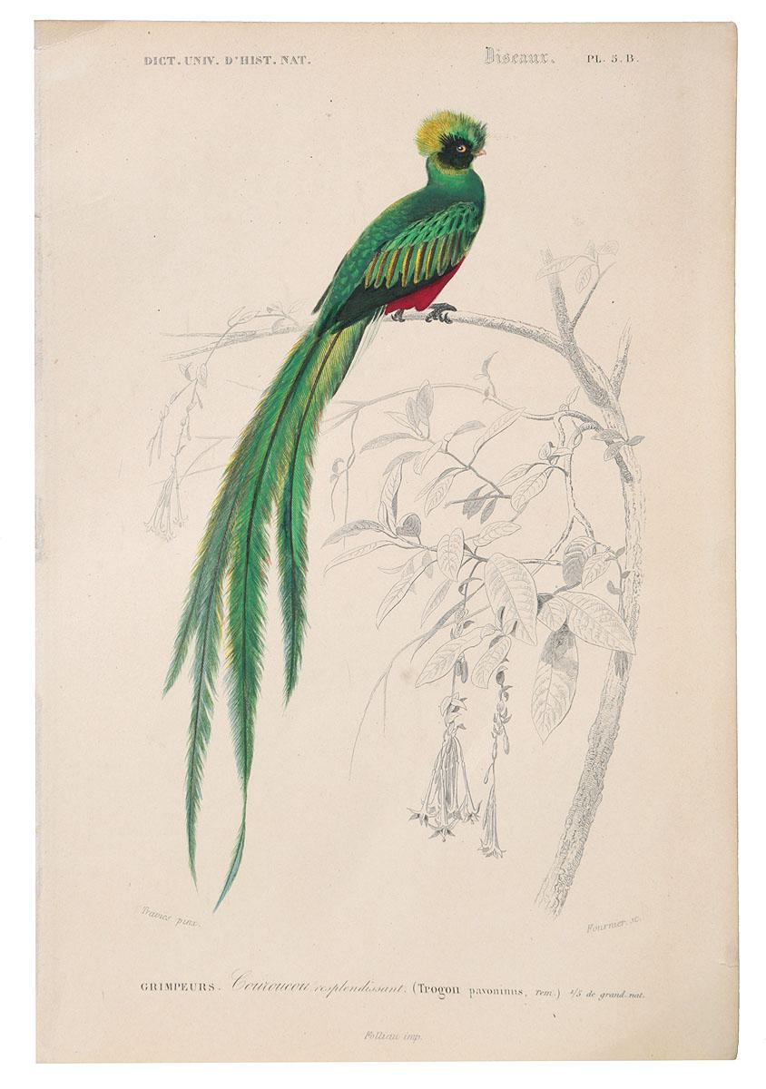 Птицы. Гравюра с ручной раскраской. Западная Европа, 1840 годНВА-2 2508 16-31Птицы. Гравюра с ручной раскраской. Западная Европа, 1840 год
