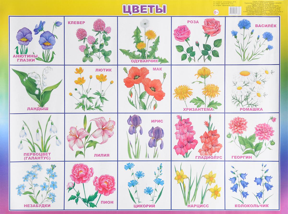 все цены на  Алфея Обучающий плакат Цветы  в интернете