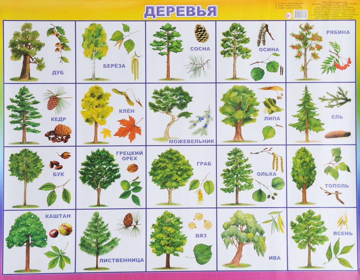 Алфея Обучающий плакат Деревья