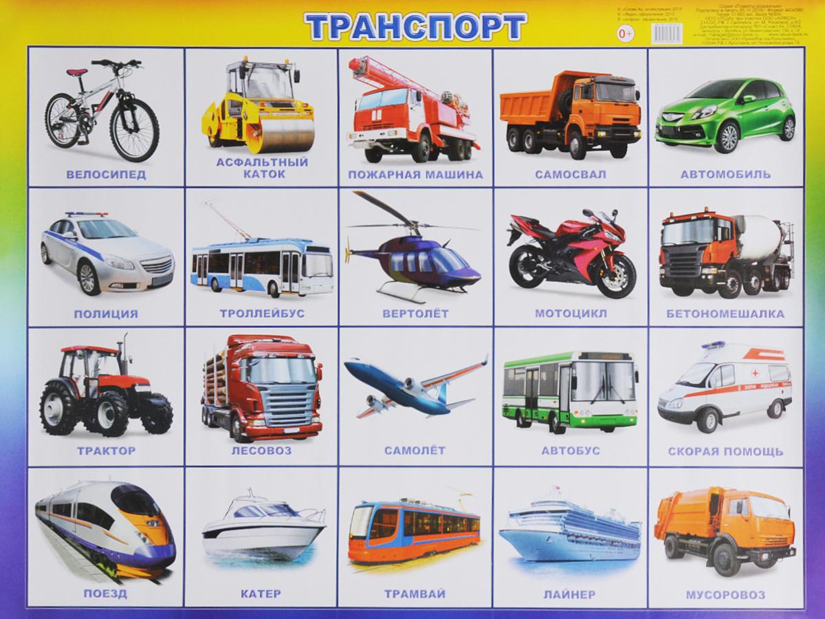 Алфея Обучающий плакат Транспорт