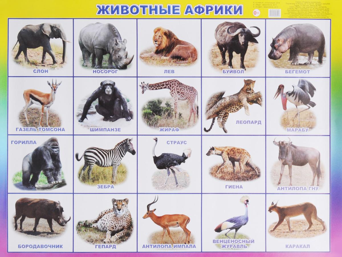 Алфея Обучающий плакат Животные Африки