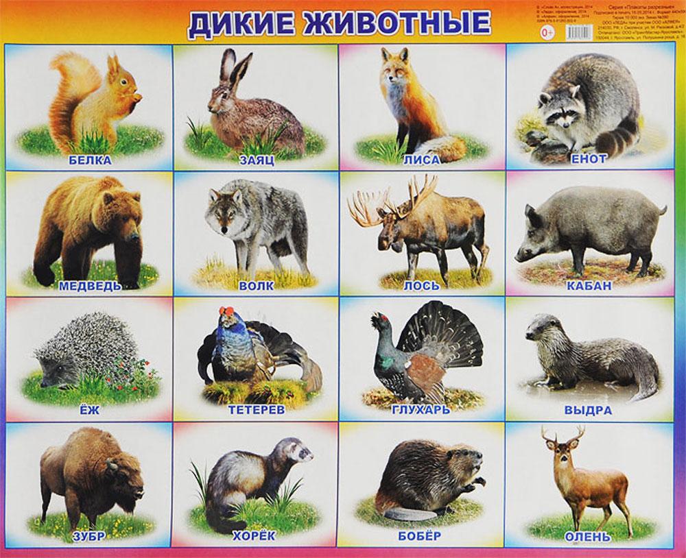 Алфея Обучающий плакат Дикие животные
