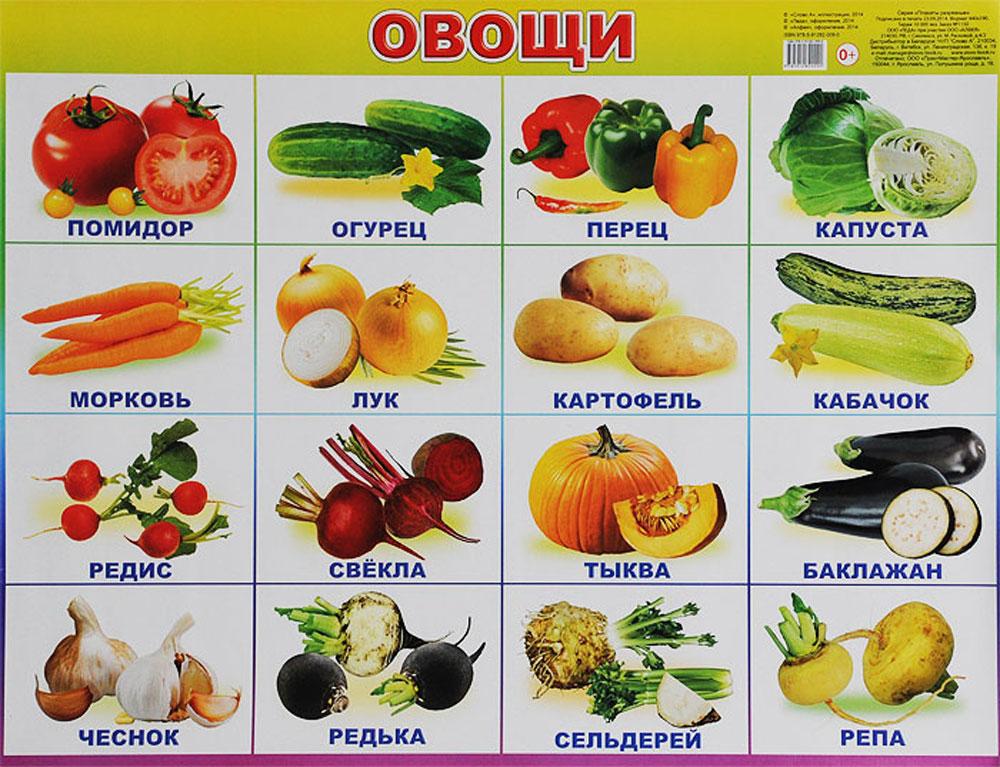 Алфея Обучающий плакат Овощи