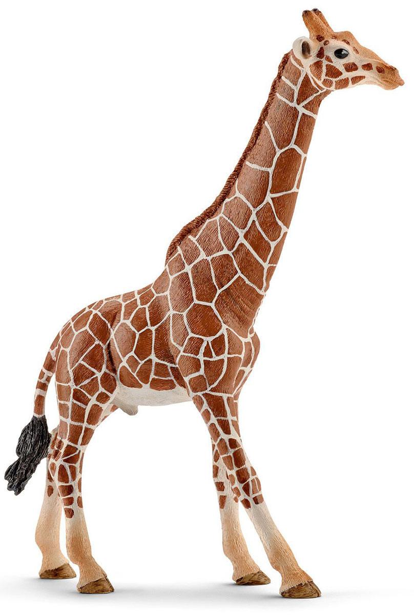 Schleich Фигурка Жираф самец14749Жираф - самое высокое в мире животное. Тело окрашено в пятнистый рисунок. На голове имеются симпатичные рожки. В настоящее время жирафа можно встретить на востоке Африки. Жираф исключительно травоядное животное и питается листвой с деревьев, где у него нет конкурентов. Тело покрыто шерстью желтого цвета с коричневыми пятнами на ней, что позволяет маскироваться от хищников. Взрослый жираф достигает 6 метров в длину, а чтобы животное могло дотянуться и схватить ветки деревьев, его длинный мускулистый язык способен высовываться на 40 см. У жирафа большие круглые глаза и пушистые темные ресницы, которые придают этим необычным животным особую очаровательность. Фигурка Schleich Жираф самец является отличным обучающим материалом и знакомит детей с представителем животного мира. Жираф с длинной шеей и характерной окраской - яркий представитель африканской саваны. Фигурка раскрашивалась вручную с особой внимательностью к каждой детали. Изготовление игрушек находится под контролем...