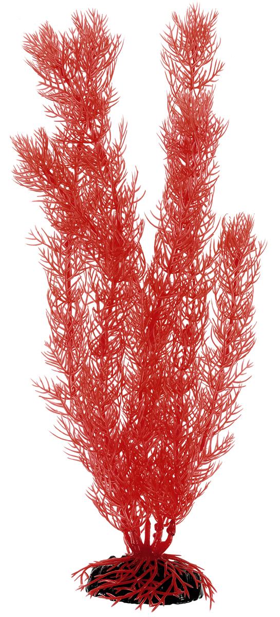 Растение для аквариума Barbus Роголистник, пластиковое, цвет: коралловый, высота 30 смPlant 016/30Растение для аквариума Barbus Роголистник, выполненное из качественного пластика, станет прекрасным украшением вашего аквариума. Пластиковое растение идеально подходит для дизайна всех видов аквариумов. Оно абсолютно безопасно, нейтрально к водному балансу, устойчиво к истиранию краски, подходит как для пресноводного, так и для морского аквариума. Растение Barbus поможет вам смоделировать потрясающий пейзаж на дне вашего аквариума или террариума. Высота растения: 30 см.
