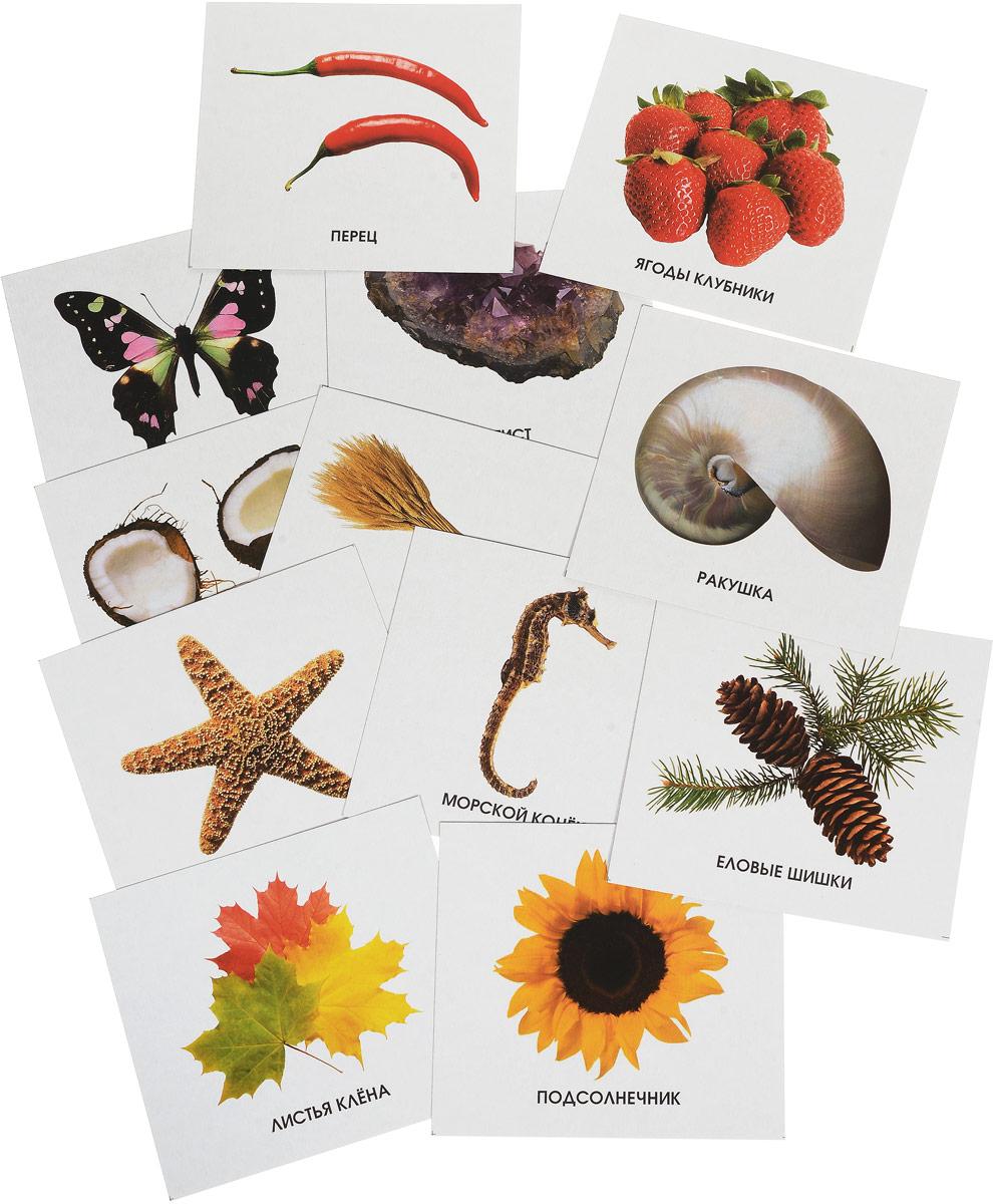 Улыбка Обучающие карточки Изучаем природу