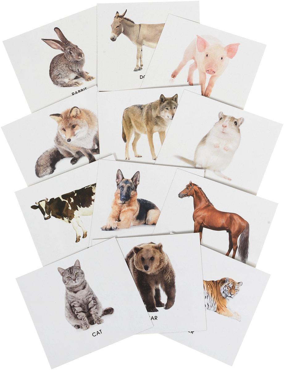 Улыбка Обучающие карточки Животные