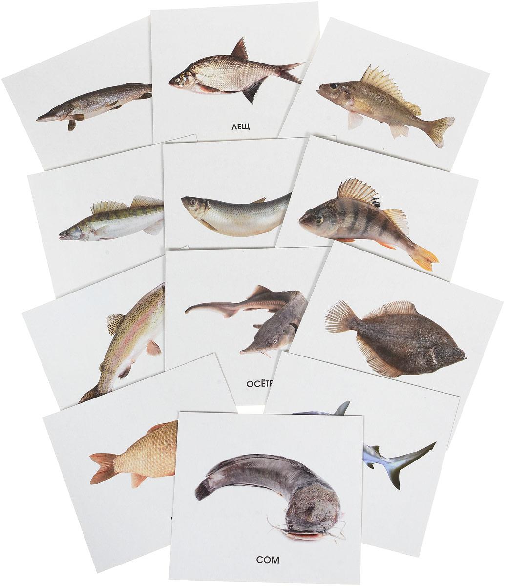 Улыбка Обучающие карточки Рыбы России