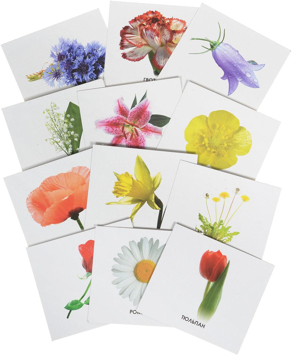 Улыбка Обучающие карточки Изучаем цветы