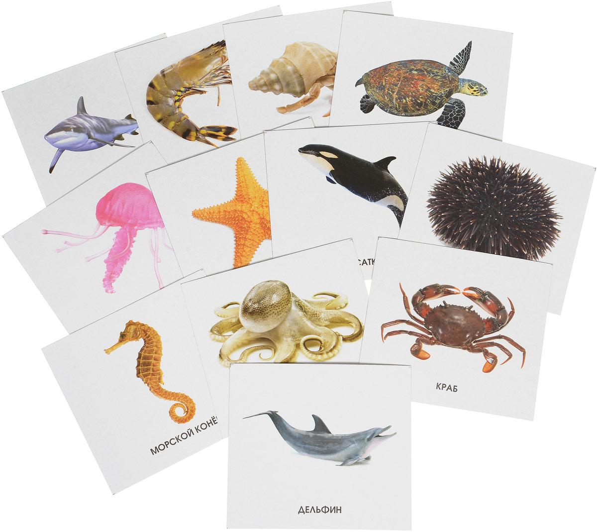 Улыбка Обучающие карточки Морские обитатели