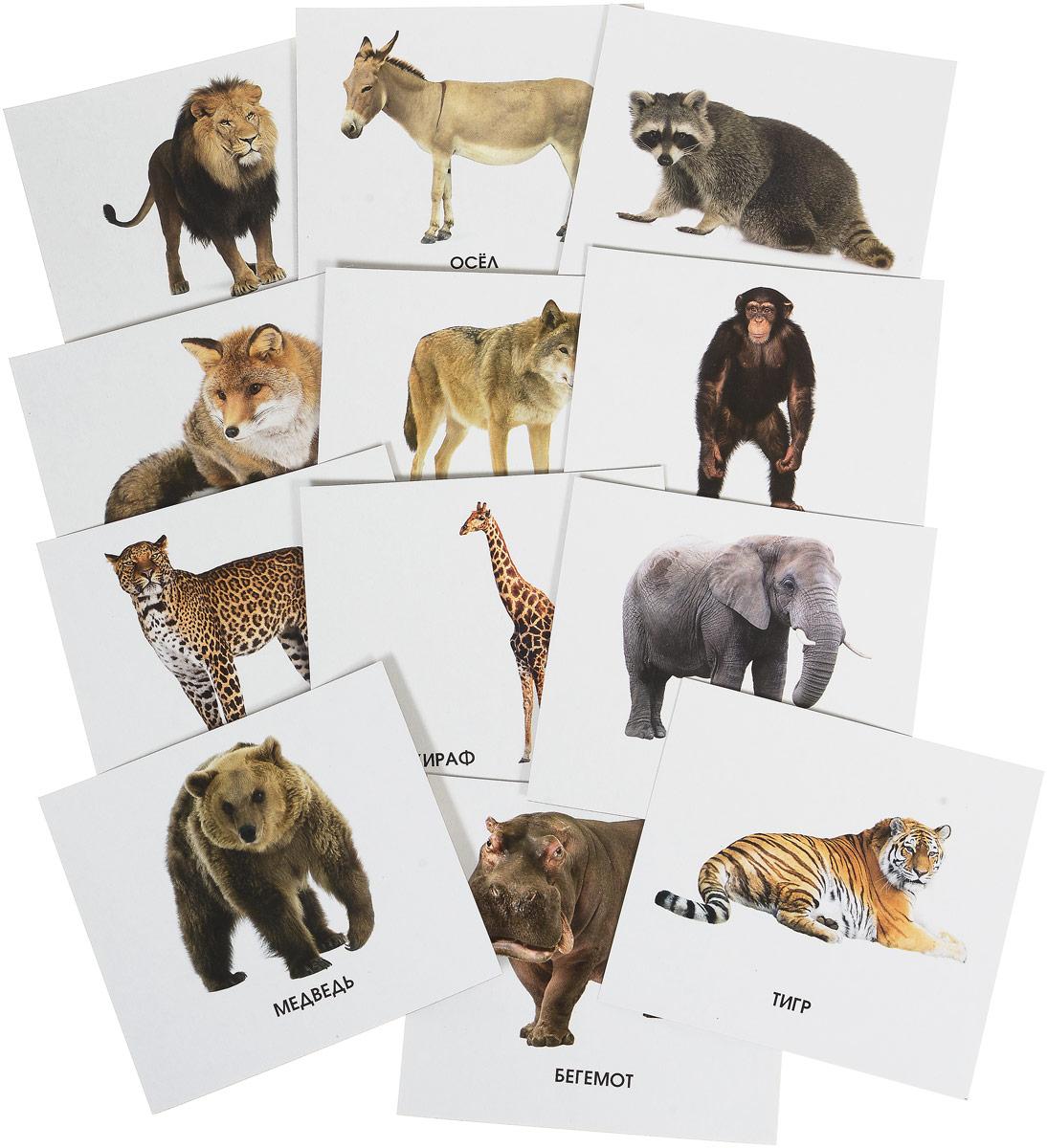 Улыбка Обучающие карточки Кто живет в зоопарке