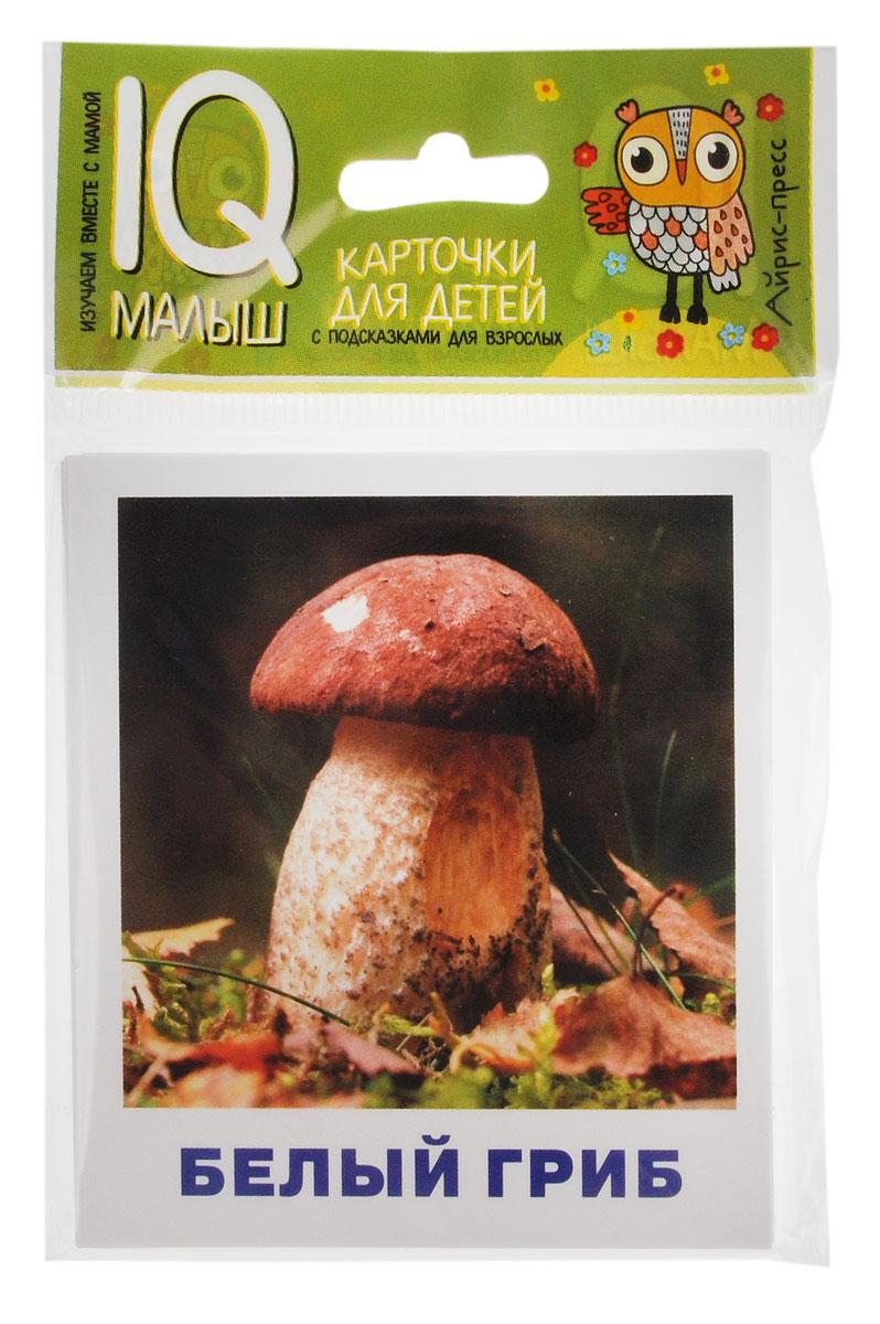 Айрис-пресс Обучающие карточки Грибное лукошко25723Игры с обучающими карточками Айрис-пресс Грибное лукошко не просто знакомят малыша с нашим удивительным миром, они развивают память, зрительное и слуховое восприятия, расширяют словарный запас, формируют интеллект. С помощью этого набора карточек ребенок познакомится с грибами. Он узнает, как выглядят разные грибы, где растут, как отличить съедобные грибы от ядовитых. В комплект входят 14 карточек с цветными картинками и текстом-подсказкой для чтения взрослыми детям и дополнительные карточки с заданиями для усвоения первых знаний.