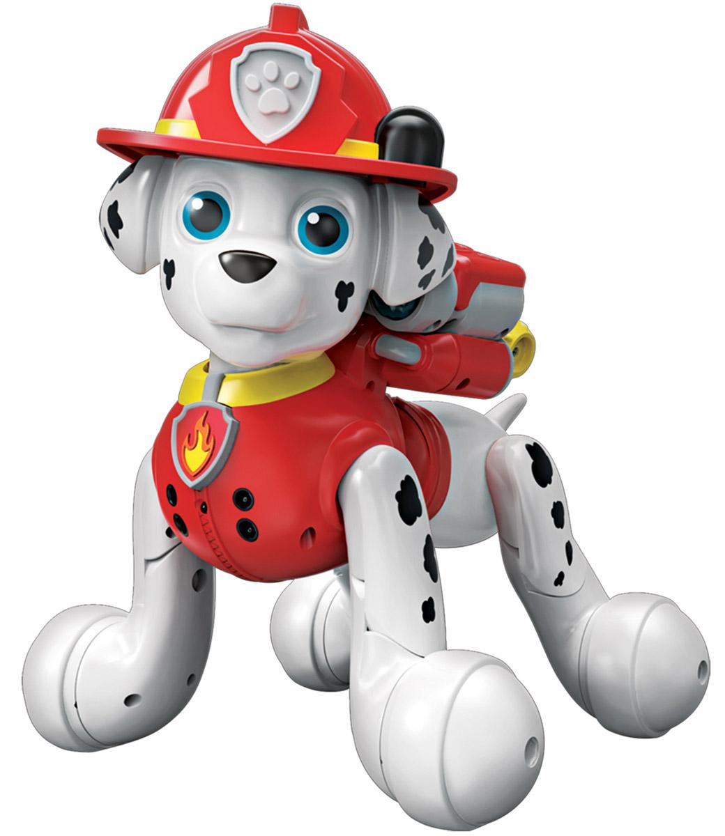 Paw Patrol Интерактивная игрушка Маршал14420Симпатичная интерактивная игрушка Paw Patrol Маршал может стать настоящим другом маленькому поклоннику Щенячьего патруля, ведь он реагирует на своего владельца почти как живой! Игрушка имеет два режима работы. В режиме Щенок Маршал произносит 40 наиболее часто употребляемых в мультфильме фраз. Функция активизируется нажатием на голову щенка. Режим Миссии и трюки активизируется нажатием на бейджик спасателя, расположенный на ошейнике. В этом режиме щенок произносит более 120 звуков и фраз, поет песни из мультфильма, танцует, считает, отыгрывает несколько самых известных сюжетов мультфильма. Всего в памяти интерактивной игрушки записано 24 спасательные миссии. На груди Маршала расположен один из двух инфракрасных сенсоров, реагирующий на движение, благодаря которому щенок может следовать за вашей рукой. Второй сенсор находится на голове щенка, с помощью него игрушка реагирует на прикосновения. Интерактивный Маршал, как и в мультфильме, одет в красную форму пожарного, на...