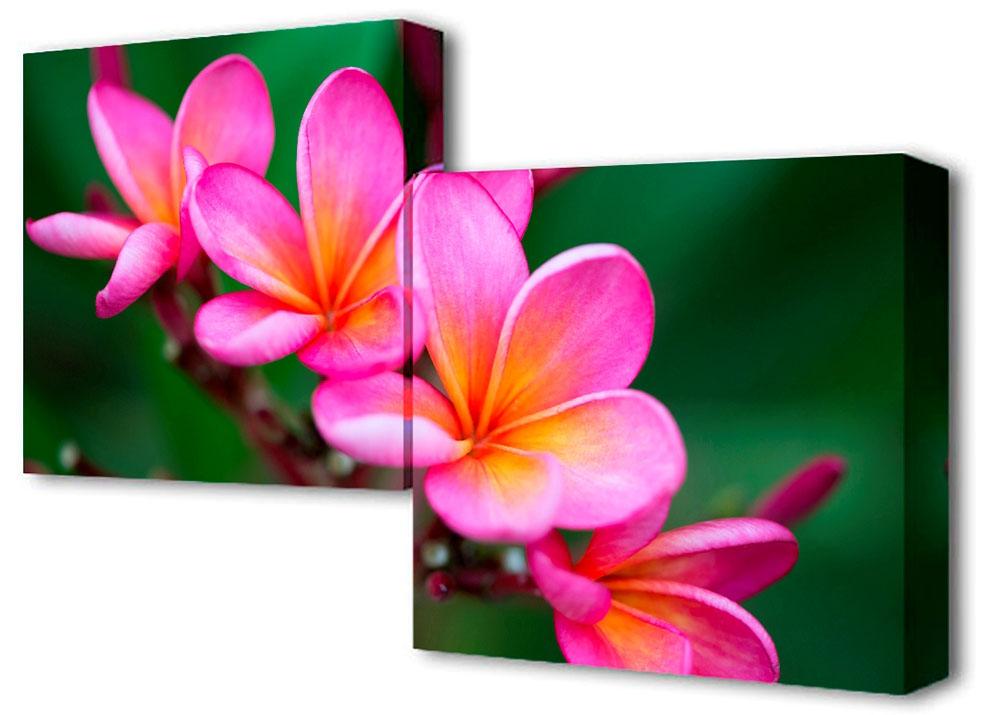 Картина модульная Toplight Цветы, 100 х 50 см. TL-M2010TL-M2010Модульная картина Toplight Цветы выполнена из синтетического полотна, подрамник из МДФ. Картина состоит из двух частей и выглядит очень аккуратно и эстетично благодаря такому способу оформления как галерейная натяжка. Подрамник исключает провисание полотна. Современные технологии, уникальное оборудование и цифровая печать, используемые в производстве, делают постер устойчивым к выцветанию и обеспечивают исключительное качество произведений. Благодаря наличию необходимых креплений в комплекте установка не займет много времени. Модульная картина - это прекрасная возможность создать яркий акцент при оформлении любого помещения. Изделие обязательно привлечет внимание и подарит немало приятных впечатлений своим обладателям. Правила ухода: можно протирать сухой, мягкой тканью. Рекомендованное расстояние между сегментами: 2 см. Толщина подрамника: 3 см.