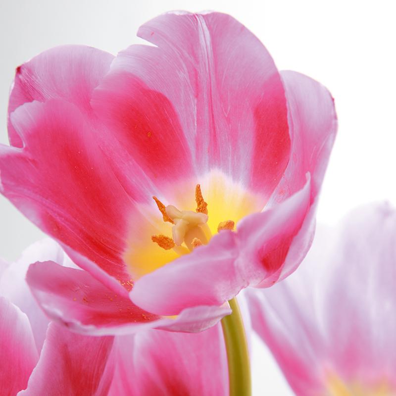 Картина Postermarket Праздничные тюльпаны, 30 х 30 см. AG 30-05AG 30-05
