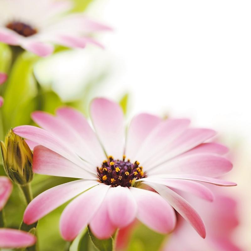 Картина Postermarket Розовые цветы, 30 х 30 см. AG 30-06AG 30-06Картина Postermarket Розовые цветы прекрасно подойдет для декора интерьера различных помещений. Постер представляет собой изображение цветов, выполненное в технике фотопечать. Картина для интерьера (постер) - это современное и актуальное направление в дизайне помещений. Ее можно использовать для оформления любых помещений (дом, квартира, офис, бар, кафе, ресторан или гостиница). работоспособность. Правильное оформление интерьера создает благоприятный психологический климат, улучшает настроение и мотивирует. Размер картины: 300 x 300 мм.