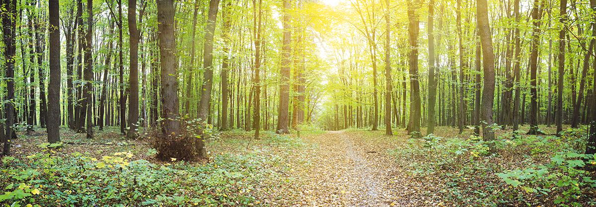 Картина Postermarket Солнечный лес, 33 х 95 см. AG 33-04AG 33-04