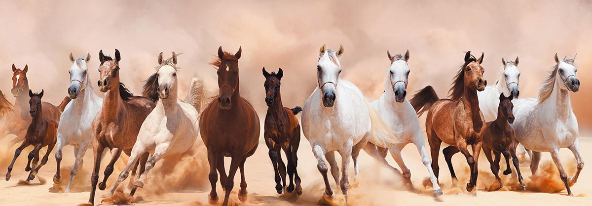 Картина Postermarket Табун лошадей, 33 х 95 см. AG 33-12AG 33-12