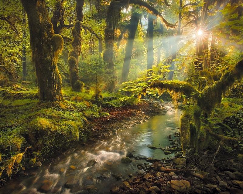 Картина Postermarket Сказочный лес, 40 х 50 см. AG 40-38AG 40-38