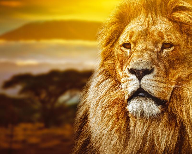 Картина Postermarket Царь зверей, 40 х 50 см. AG 40-48AG 40-48